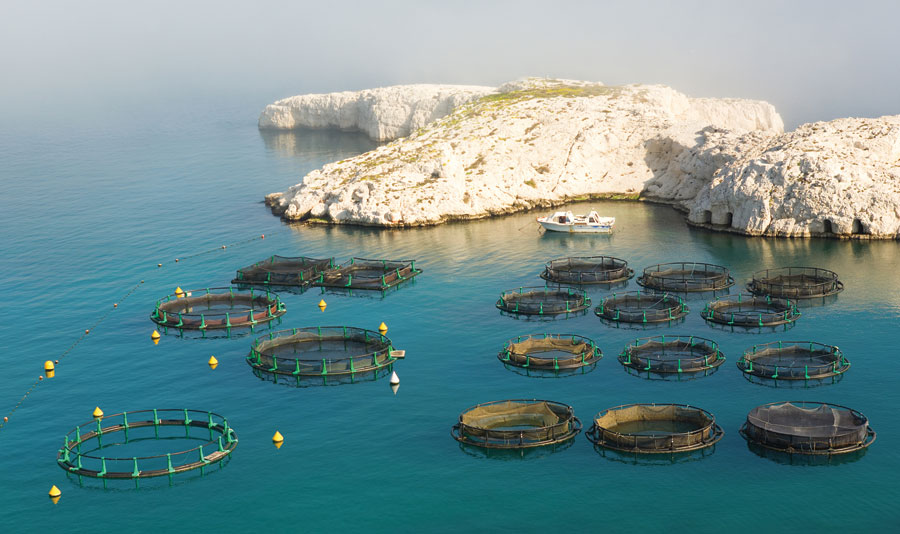 Aquaculture is enhanced and optimized by good Marine Spatial Planning.