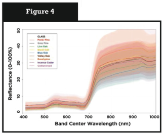 Observed VNIR spectral variability in tree genus/species VNIR spectra from a project in the Sierra Nevada foothills.