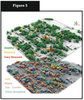 Lidar perspective from Louisville, KY colored by tree health (above) and type (below).