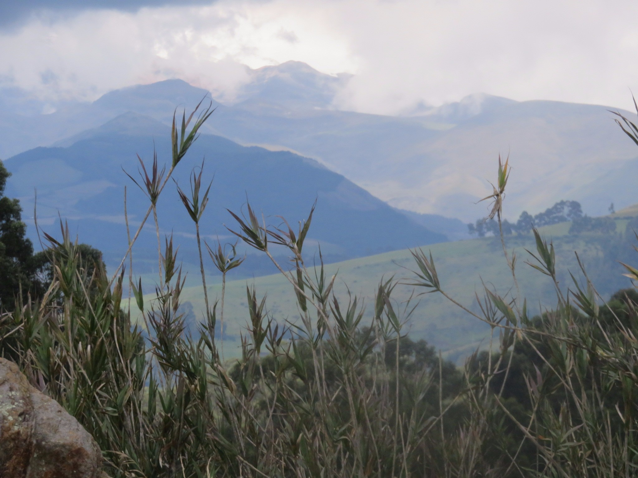 The environs of Quito are both high altitude and tropical with a tremendous diversity of flora and fauna.